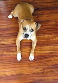 discover the best vinyl flooring for your dog