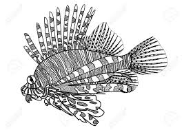 digital drawing zentangle lion fish for coloring book tattoo shirt design stock vector