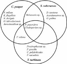 Plant And Animals Adaptations Venn Diagram Venn Diagram To Indicate Common And Unique Best Hit Species In The