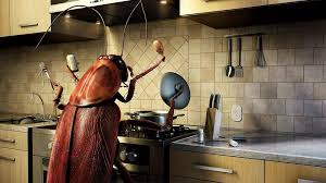 How To Get Rid Of Roaches In Your Apartment Car Or Home