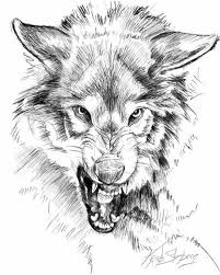 Image Result For Cornered Wolf Drawings Tattoos