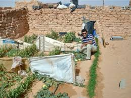 Kitchen Gardens Kitchen Garden In Sahara Desert Combating Malnutrition And