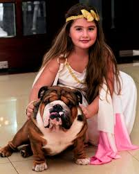 is the english bulldog the right dog breed for you have you been you looking for english bulldog puppies