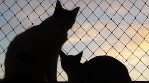 Fliegengitter Katzensicher Machen Die Besten Tipps Und Tricks