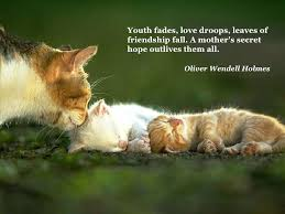 Quotes About Pets And Friendship Inspiration Love Quotes For Cats With Cute Quote About Cats As Pets For Produce