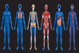 Организм человека является для паразита средой обитания   организм человека является для паразита средой обитания