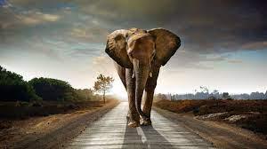 Elephant Wallpapers - Top Free Elephant ...