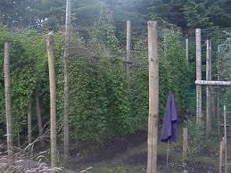 fences wilson summary how to make fence fences essay on myessays com
