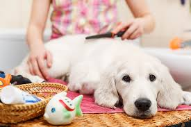 Using tea tree oil for your dog's skin infections - PetMeds® Pet ...