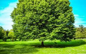 Green Tree Wallpaper Hd Download