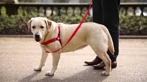 Premier Easy Walk Dog Harness Size Chart Www