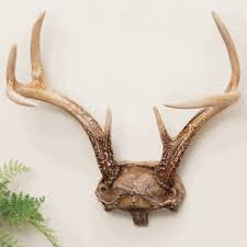 Horn Decorative Accessories Antler Decor Accessories from Black Forest Decor 96