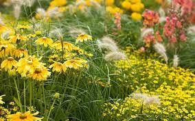 how to start a flower garden the home