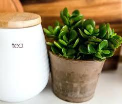 good house plants jade plants best indoor plants low light australia