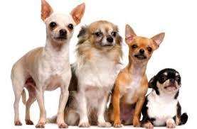 Dierenwet - het besluit houden van dieren www