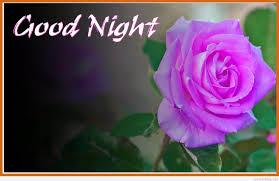 Good Evening Rose Wallpaper Free Hd Wallpaper