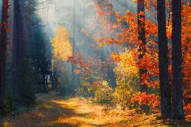 Jesień w Białce Tatrzańskiej