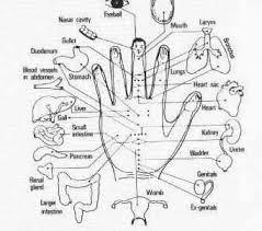 Hand Acupressure Reflexology Chart Www
