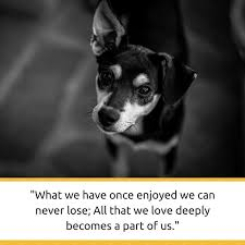 Loss Of Pet Quotes Stunning 48 Powerful Quotes About Losing A Dog Dealing With Grief Puppy Leaks