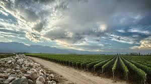 The World's Best Vineyards