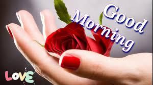 Good Morning Video Free Download Good Morning Status Videos