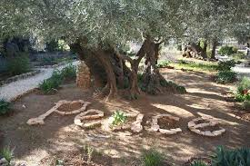 tal megged tour guide in israel day tours the garden of gethsemane