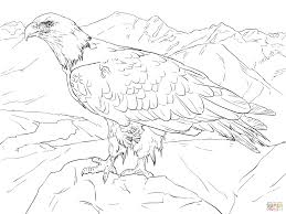 Bald Eagle Coloring Page Plasticultureorg