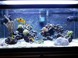 Aquarium Backgrounds Poll Aquarium Backgrounds For Reef Tank Reef Central Online Community