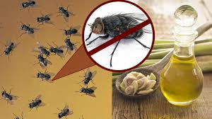 Home Reme s To Get Rid Flies By Natural