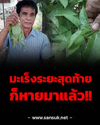 คนเป็นมะเร็งระยะสุดท้ายยังหายได้ - สมุนไพรไทย จำหน่าย : Inspired by  LnwShop.com