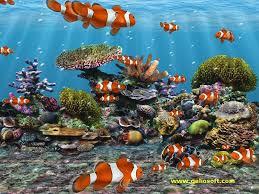 3d fish wallpaper. Brilliant Fish 3D Screensaver And Wallpaper With Clown Fish Intended 3d A
