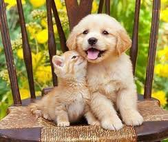 cute puppies and kittens kissing. Contemporary Puppies Kitty Kissing Her Friend Puppy Kittens And Puppies Cats Kittens  Orange Cute Puppies Kissing