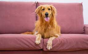 claw proof sofa covers for pets