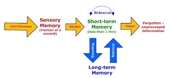 Long Term Memory Chart Human Memory The Process To Acquire Store Retain Long Term