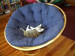 diy papasan cushion