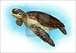 Small Picture Line Art and Full Color Illustrations of Sea Turtles