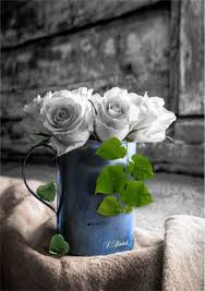 Goedemorgen Zwart Wit Zwart En Kleuren