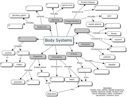 body muscles diagram anatomy organ systems blanks human anatomy chart page 59 of 202 pictures of human anatomy body on the human respiratory system worksheet