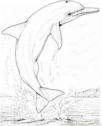 Dolphin Coloring Page 17 Coloring Page Free Dolphin Coloring Pages