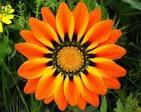 Beautiful Colorful Flower Photos   Nature - BabaMail