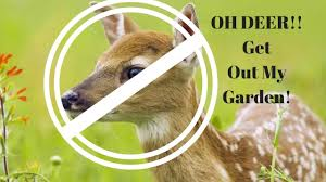 the easiest way to keep deer away from your garden and fruit trees