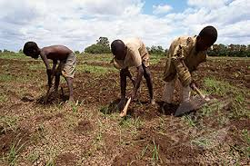 Image result for child labour on farms