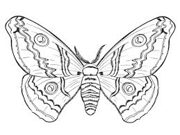 awesome bug coloring pages 17 herbie the love bug coloring pages coloring pages on love bug printable