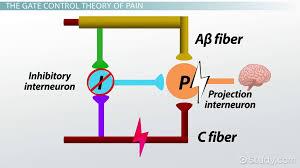 control theory essay social control theory essay