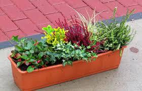 Balkonpflanzen Set F R Balkonkasten 60 Cm Lang Pflanzen Versand