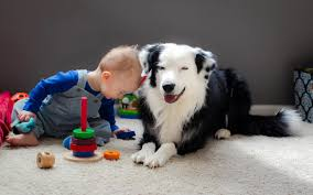 cute pet images free cute dog hd wallpapers free