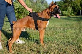 dog harness uk nylon for german boxer worldwide shipping boxer dog harness uk