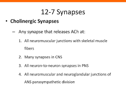 12-7 Synapses Synaptic Activity Action potentials (nerve impulses) - ppt  download