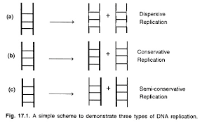 essay on dna replication genetics simple scheme to demonstrate three types of dna