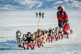 Watch the Iditarod